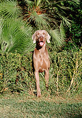 DOG 06 CB0002 01