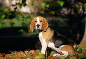 DOG 06 CB0016 01