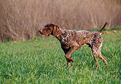 DOG 06 CB0017 01