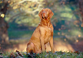 DOG 06 CB0027 01