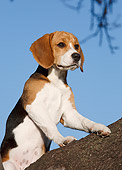DOG 06 CB0030 01