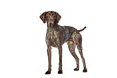 DOG 06 CB0039 01