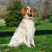 DOG 06 CB0060 01
