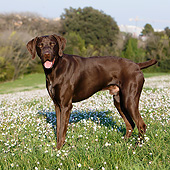 DOG 06 CB0061 01