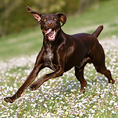 DOG 06 CB0064 01
