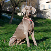 DOG 06 CB0078 01