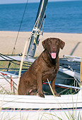 DOG 06 CE0069 01