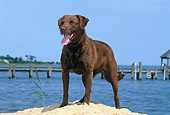 DOG 06 CE0070 01
