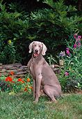 DOG 06 CE0074 01
