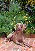 DOG 06 CE0075 01