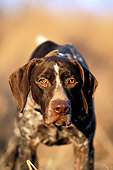 DOG 06 DB0004 01
