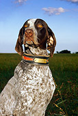 DOG 06 DC0023 01