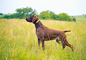DOG 06 DC0026 01
