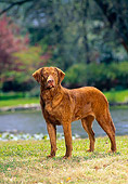 DOG 06 DC0043 01