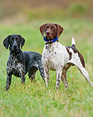 DOG 06 DS0018 01