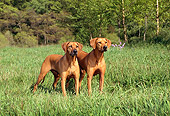 DOG 06 FA0001 01
