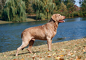 DOG 06 FA0016 01