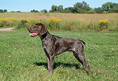 DOG 06 FA0022 01