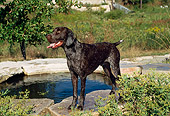 DOG 06 FA0024 01