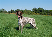 DOG 06 FA0027 01