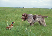 DOG 06 GL0004 01