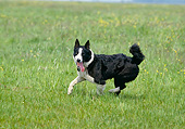 DOG 06 GL0005 01