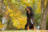 DOG 06 JE0008 01