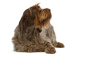 DOG 06 JE0013 01