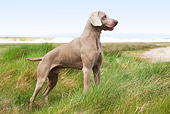 DOG 06 JE0015 01