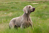 DOG 06 JE0020 01