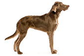 DOG 06 JE0024 01