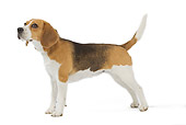 DOG 06 JE0031 01