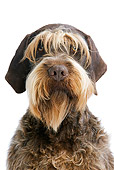 DOG 06 JE0034 01