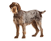 DOG 06 JE0036 01