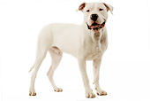 DOG 06 JE0043 01