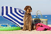 DOG 06 JE0044 01