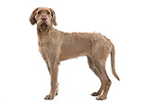 DOG 06 JE0050 01