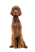 DOG 06 JE0051 01