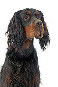 DOG 06 JE0052 01