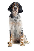 DOG 06 JE0053 01