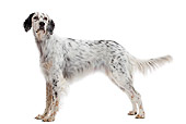 DOG 06 JE0054 01