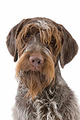 DOG 06 JE0060 01