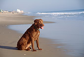 DOG 06 JN0001 01
