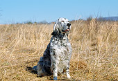 DOG 06 JN0002 01