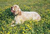 DOG 06 JN0003 01