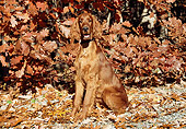DOG 06 JN0006 01