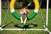 DOG 06 JN0008 01