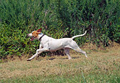 DOG 06 JN0009 01