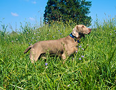 DOG 06 JN0011 01