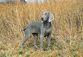 DOG 06 JN0013 01